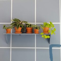 A shelf on a blue-grid wall with five plants sitting in terracotta pots. on the bottom left a right angle is painted in dark blue.